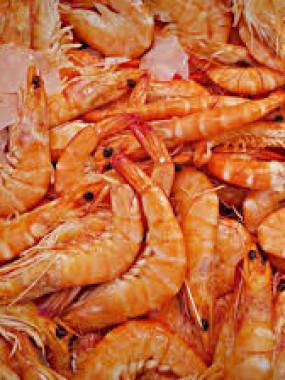 Présentation de crevettes